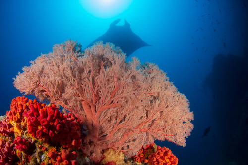Conservation Raja Ampat Small Change Big Change The SEA People