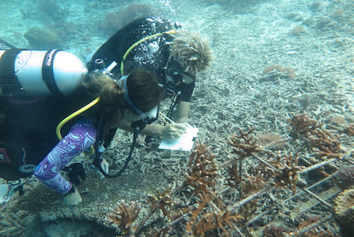 MPA Monitoring Orang Laut Raja Ampat, The SEA People, Conservation Raja Ampat