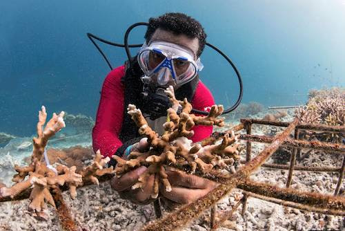 Yaf Keru Reef Restoration Raja Ampat The SEA People Orang Laut